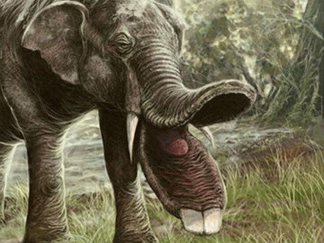 """Tổ tiên của loài voi và tê giác cổ đại có vẻ ngoài """"kỳ dị"""" hơn ngày nay nhiều!"""