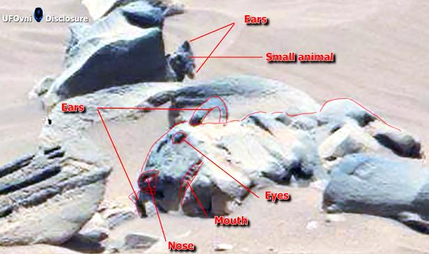 Mèo Sao Hỏa và những vật thể kỳ lạ