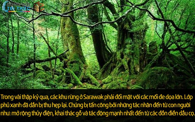 Rừng ở Sarawak