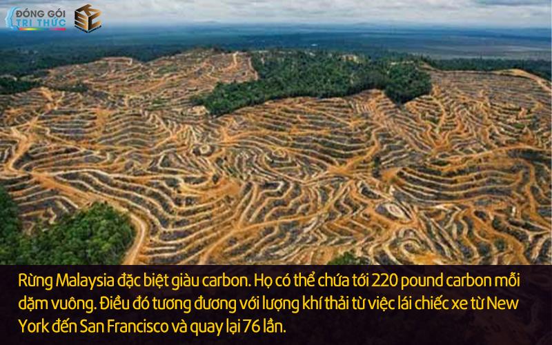 Nạn phá rừng ở Malaysia