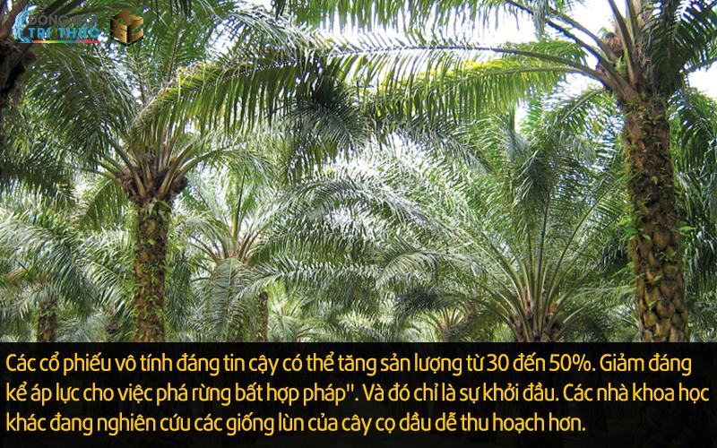 Chủng loài mới của cây cọ dầu.